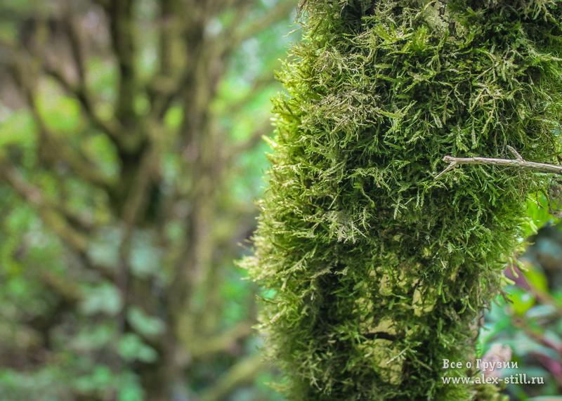 Красота грузинских лесов