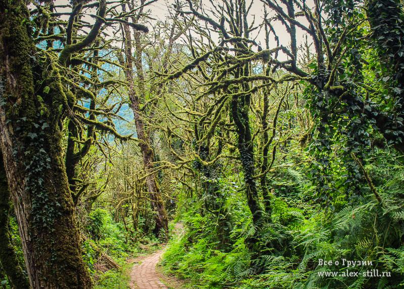 Самшитовый лес перед водопадом